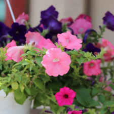 Hanging_Baskets_Newark_Ohio_Hope_Timber_Garden_Center