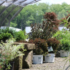 Potted_Trees_Newark_Ohio_Hope_Timber_Garden_Center